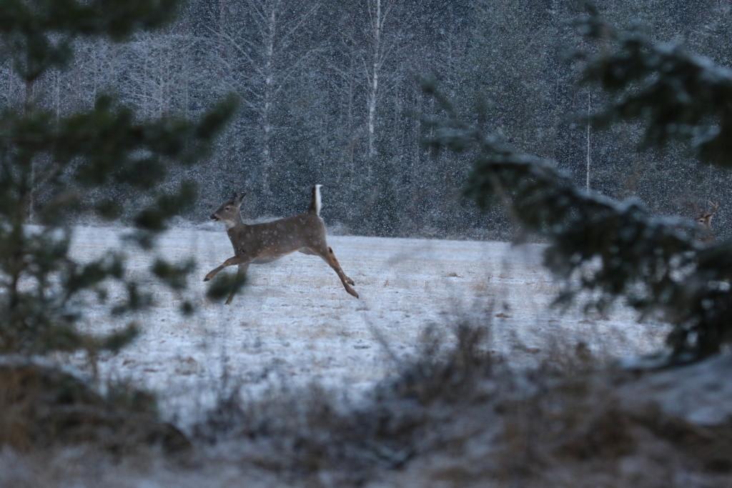 Kuva: Vesa-Matti Virtanen
