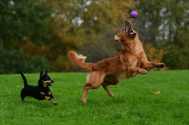 Endelig kan hunder hilse igjen!
